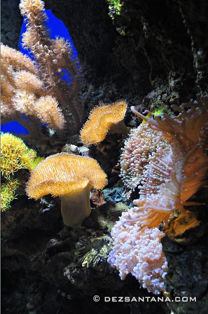 New York City Photography By Dez Santana Ny Aquarium
